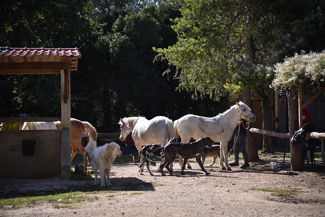 Balade à cheval avec La Ballade du Val de Cèze