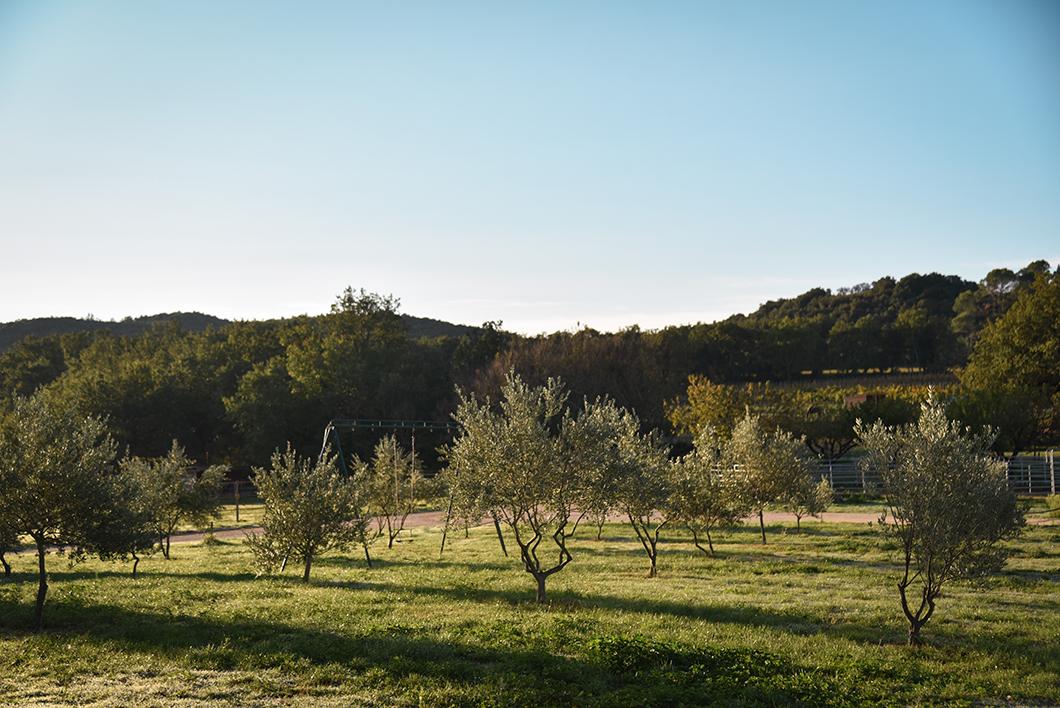 Où séjourner en Provence Occitane ? Les charmants gîte du Domaine de Gressac