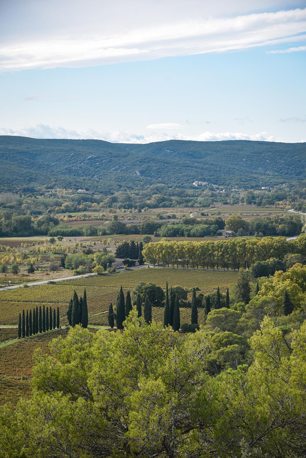 Les vignes de la Provence Occitane
