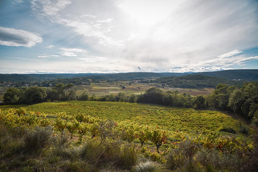 Découvrir les vignobles de la Provence Occitane