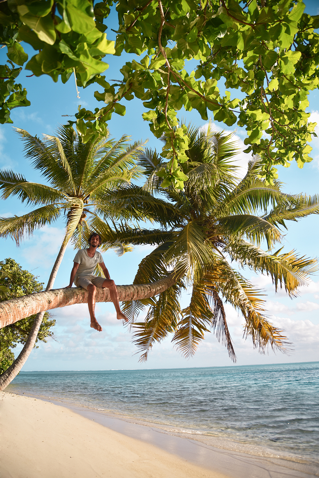 En haut des cocotiers