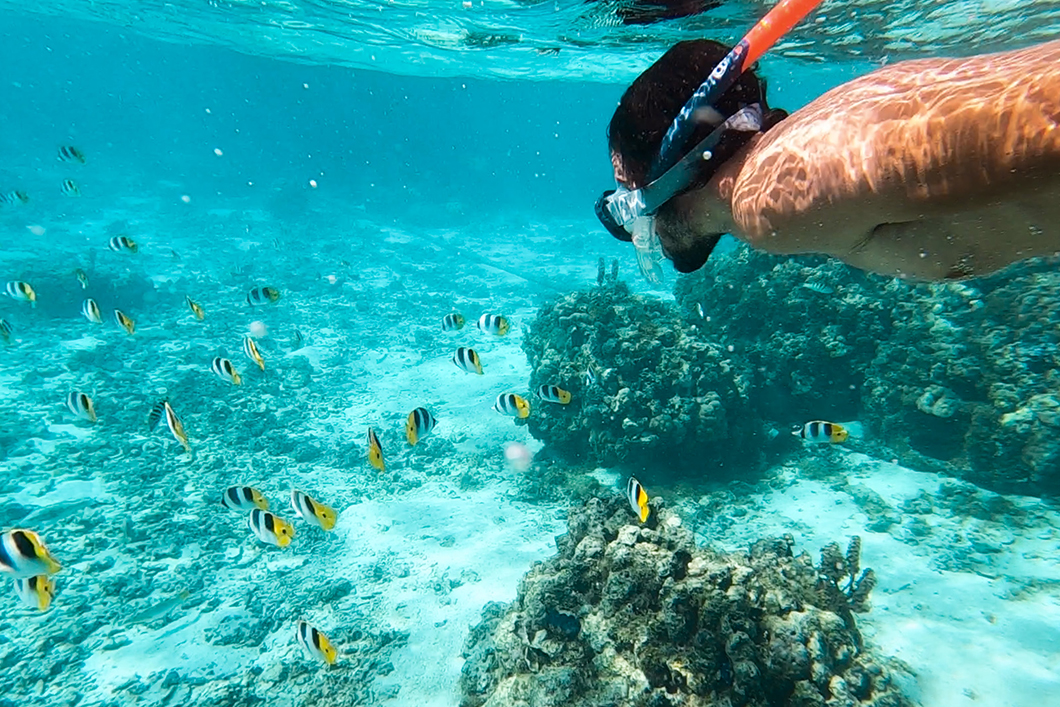 Snorkeling avec les poissons de Huahine