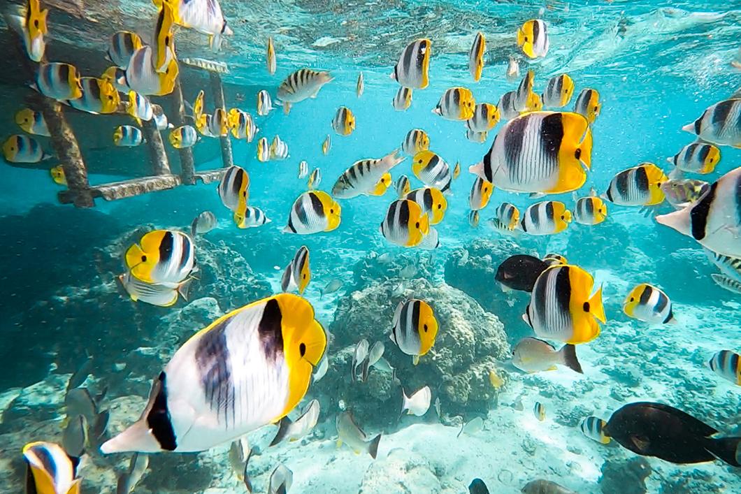 Que faire à Huahine ? Snorkeling