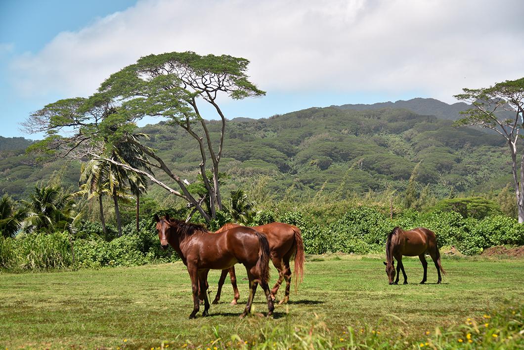 Balade à cheval à Huahine