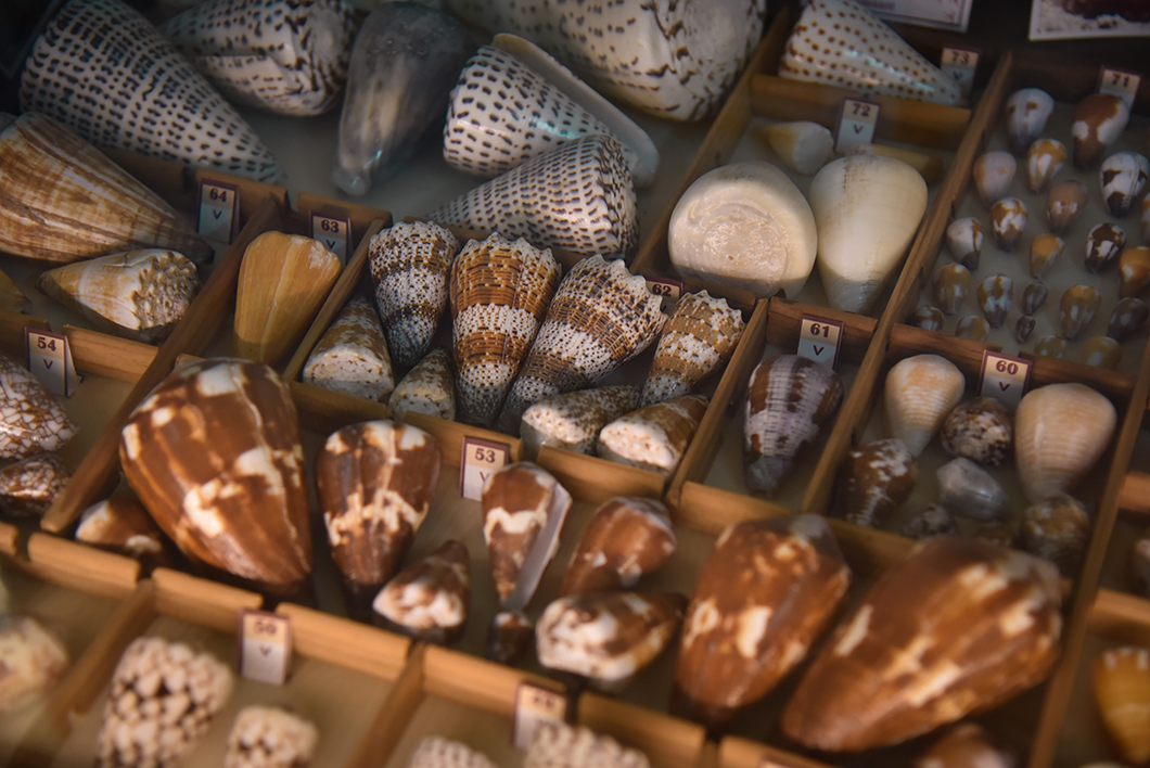 Visiter le musée du coquillage, visite incontournable à Huahine