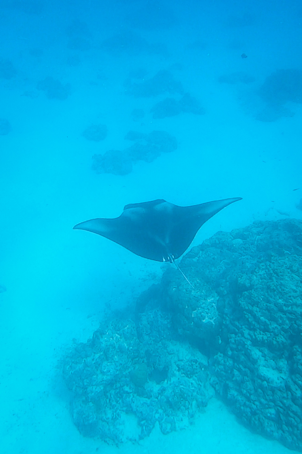 Plongée à Maupiti