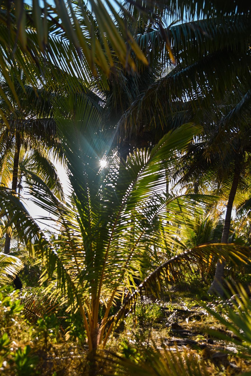 Les paysages sauvages de Maupiti