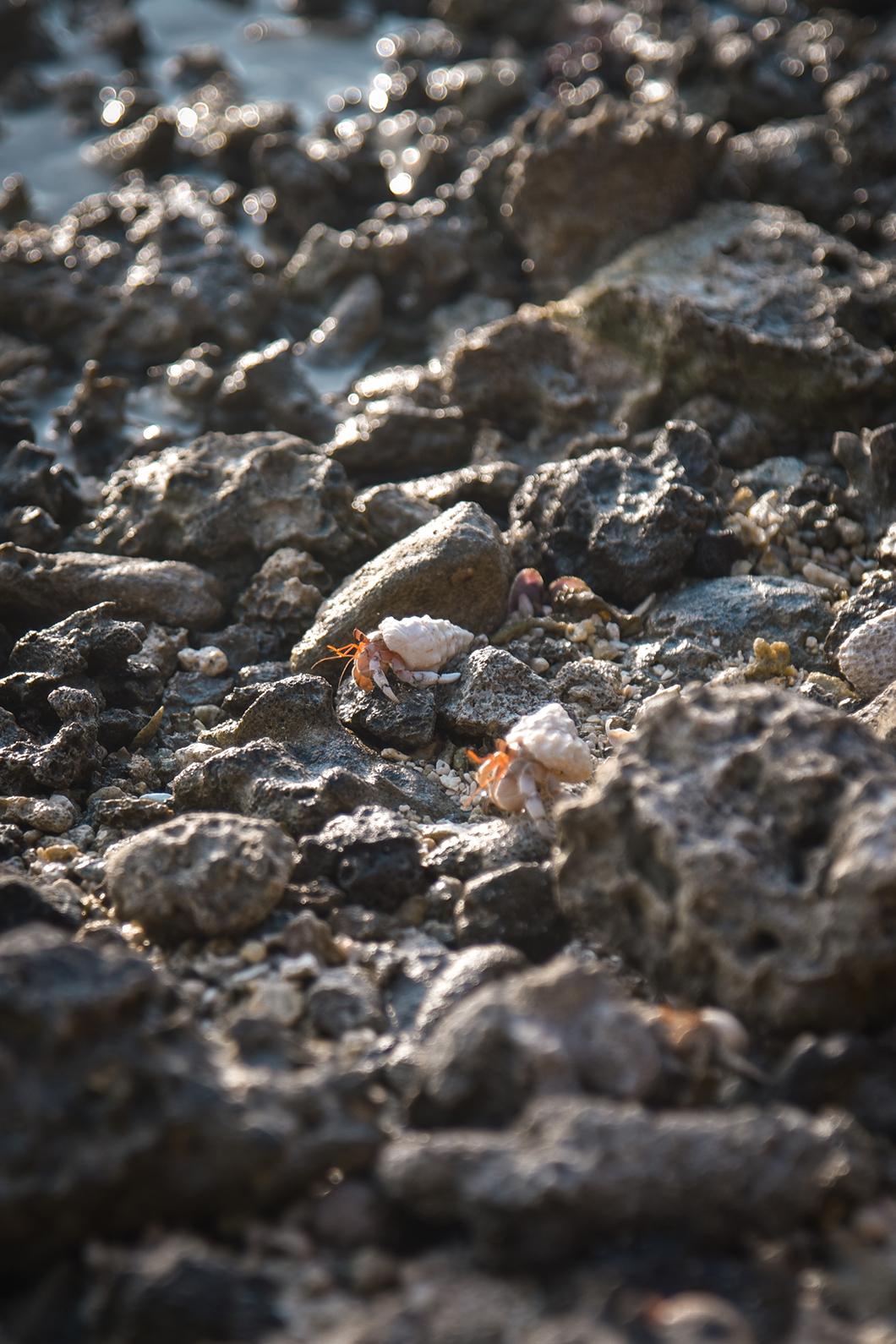 La plage du motu Pae'ao et ses nombreux coquillages