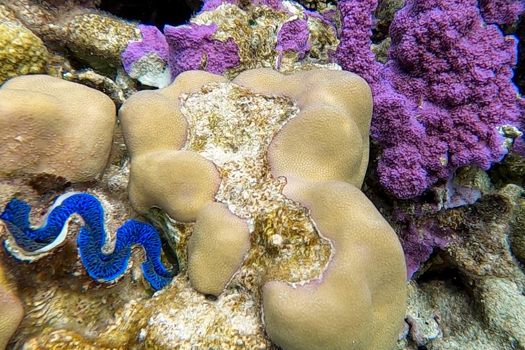 Visiter le jardin de corail, activité à faire à Maupiti