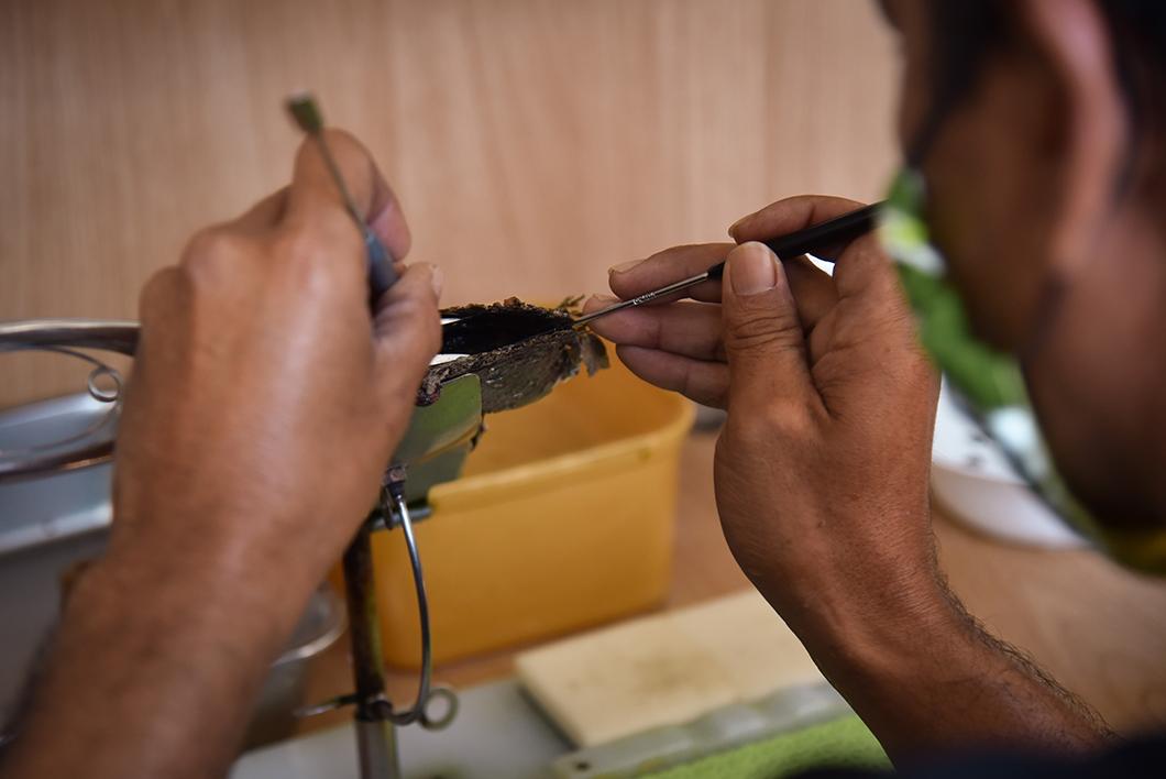Découvrir une ferme perlière à Taha'a