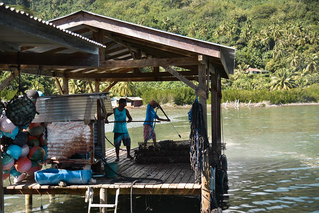 Visiter une ferme perlière à Tahaa, incontournable en Polynésie Française