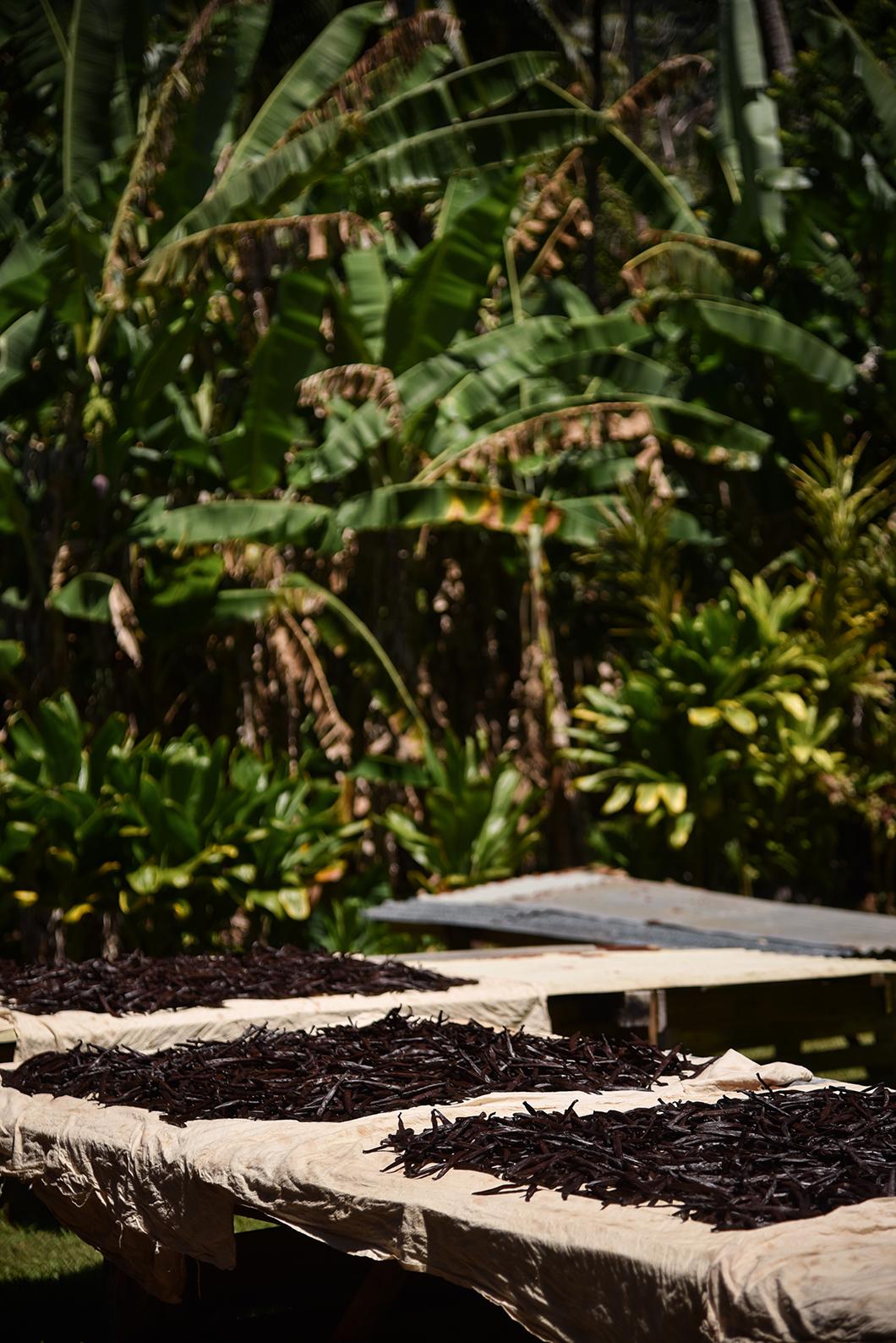 Vanilleraie à Taha'a en Polynésie Française