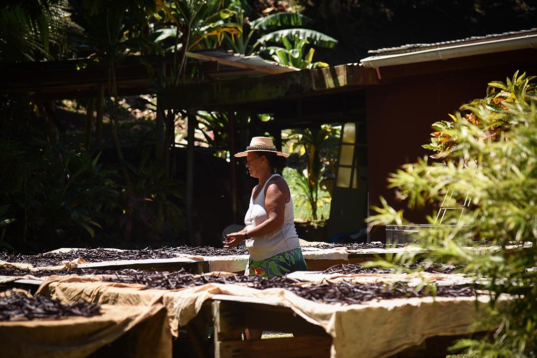 Découvrir les plantations de vanille à Taha'a