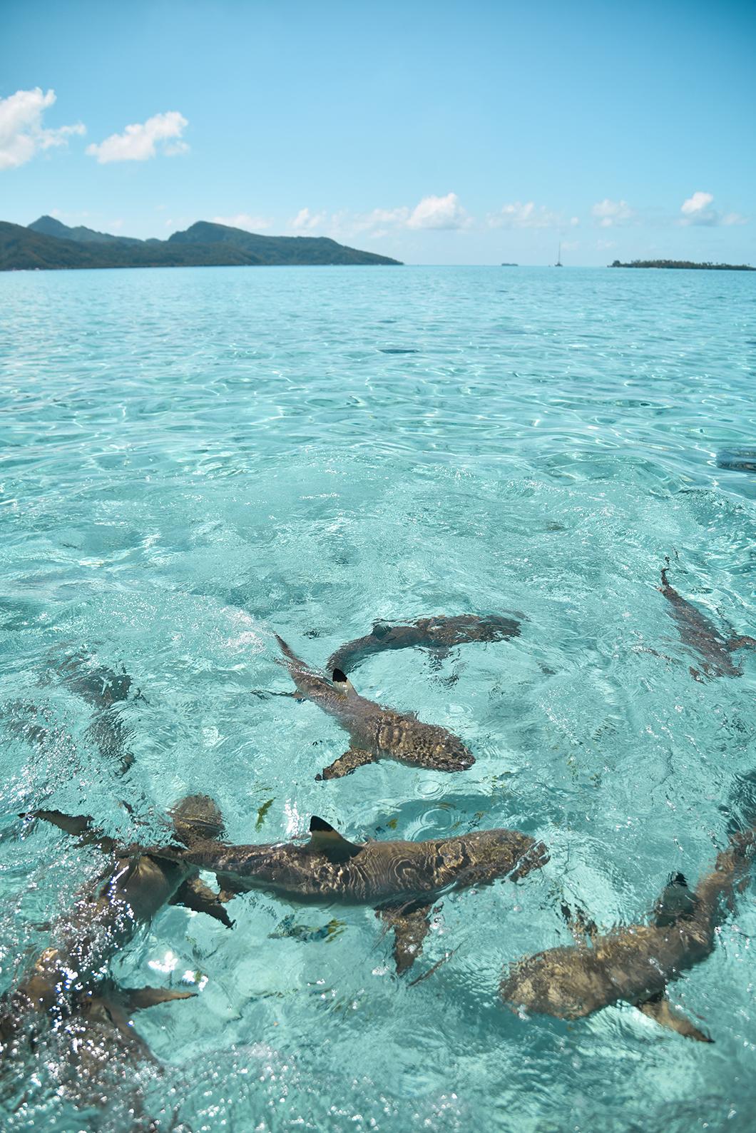 Nager avec les raies et requins à Tahaa
