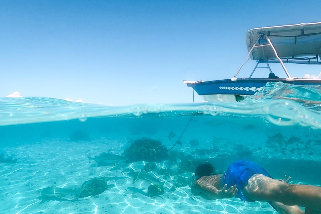 Snorkeling avec les requins à Taha'a