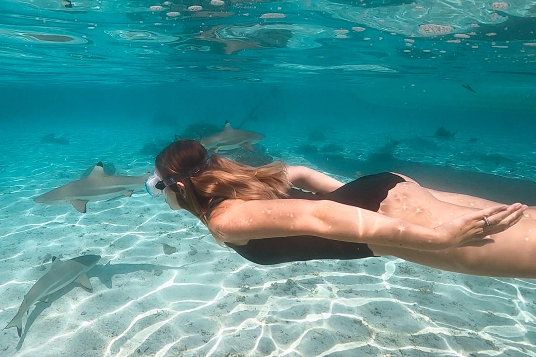 Guide de Tahaa, nager avec les requins