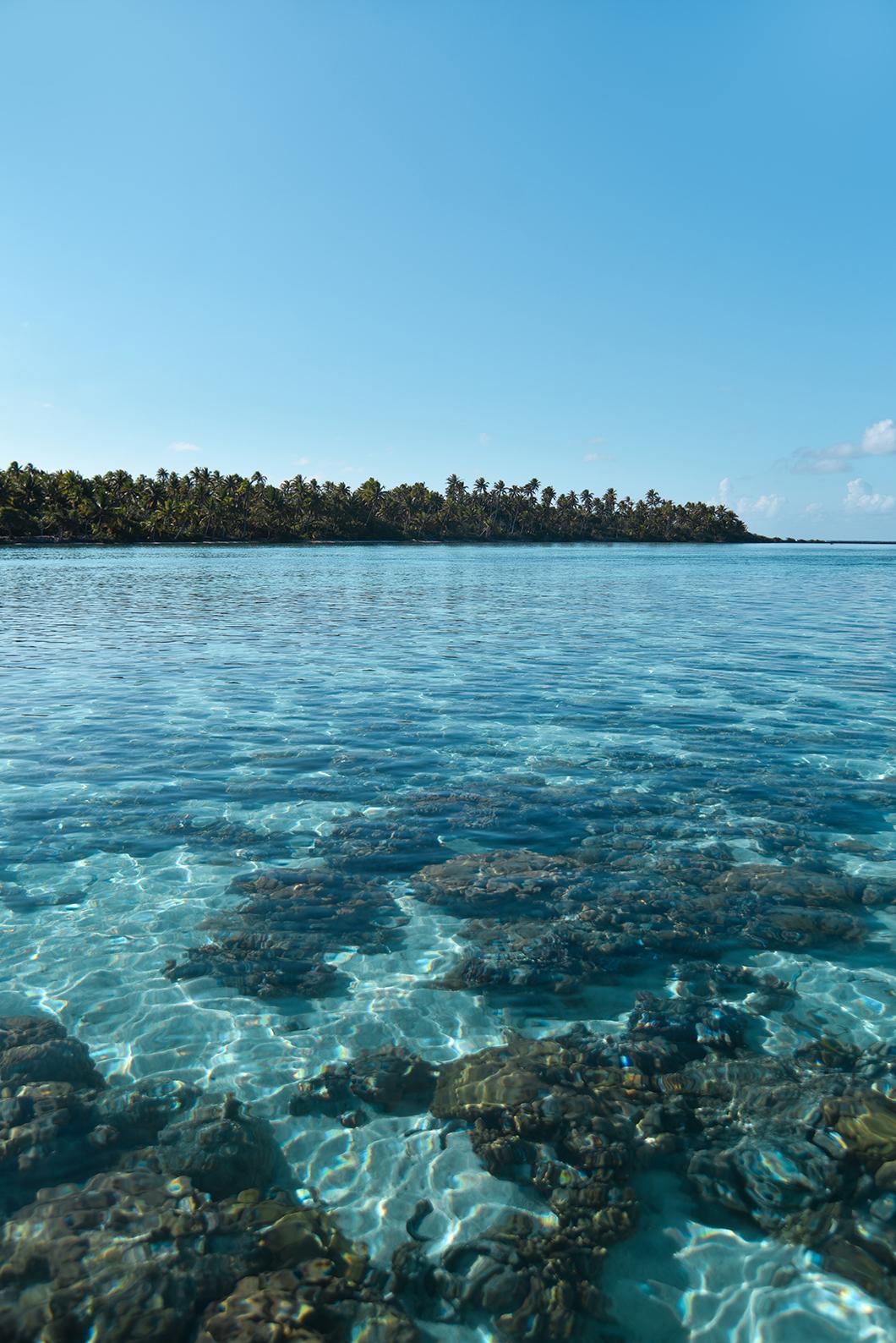 Jardin de corail de Taha'a, le plus beau de l'Archipel de la Société