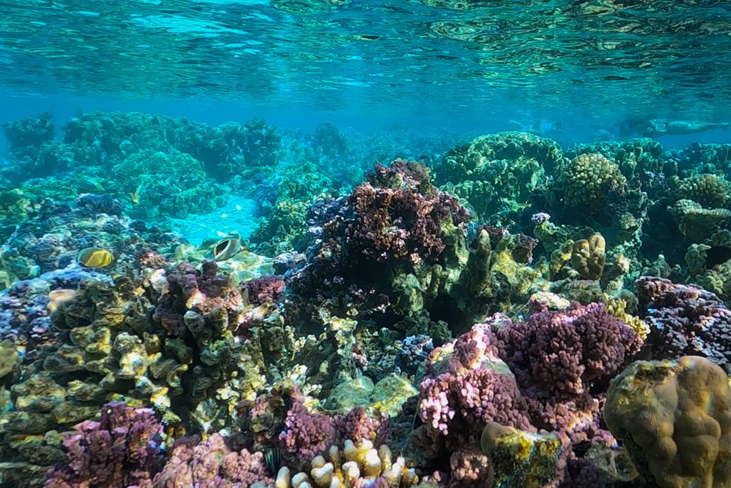 Découvrir le jardin de corail incontournable à Taha'a