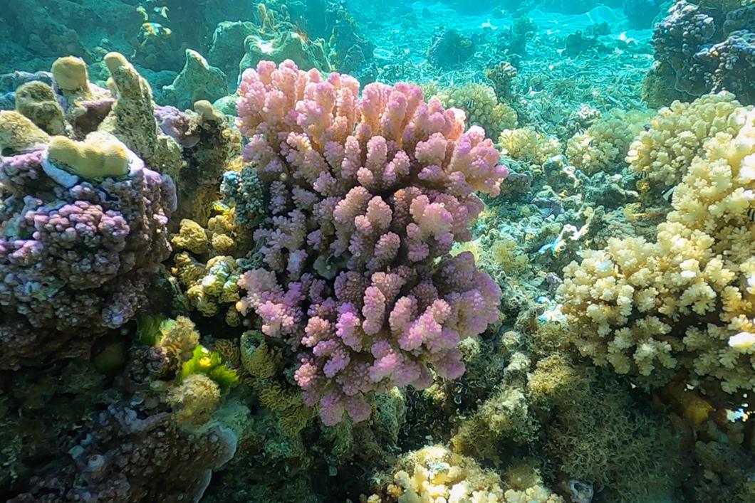 Snorkeling dans le jardin de corail de Taha'a