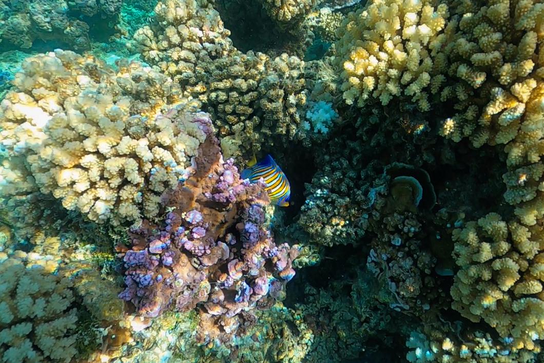 Snorkeling avec les poissons de Tahaa