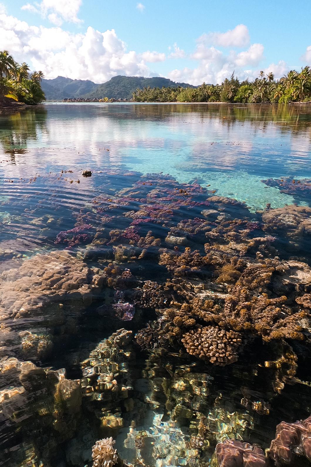 Jardin de corail du Taha'a Island Resort and Spa, incontournable à faire à Taha'a