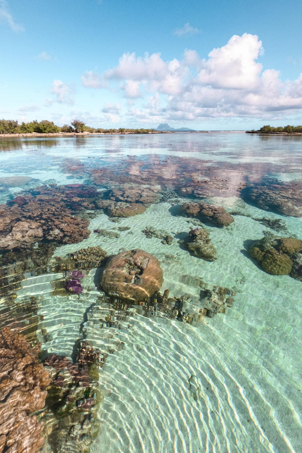 Le jardin de corail du Taha'a Island Resort and Spa