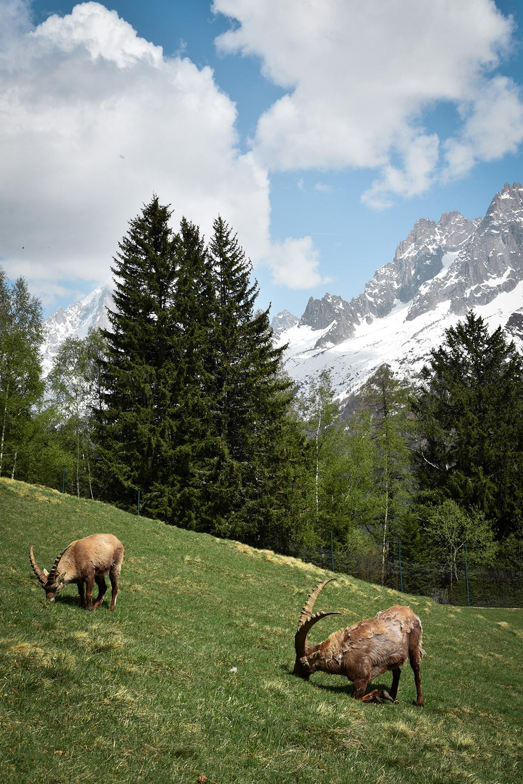 Aller au Parc du Merlet, incontournable à Chamonix