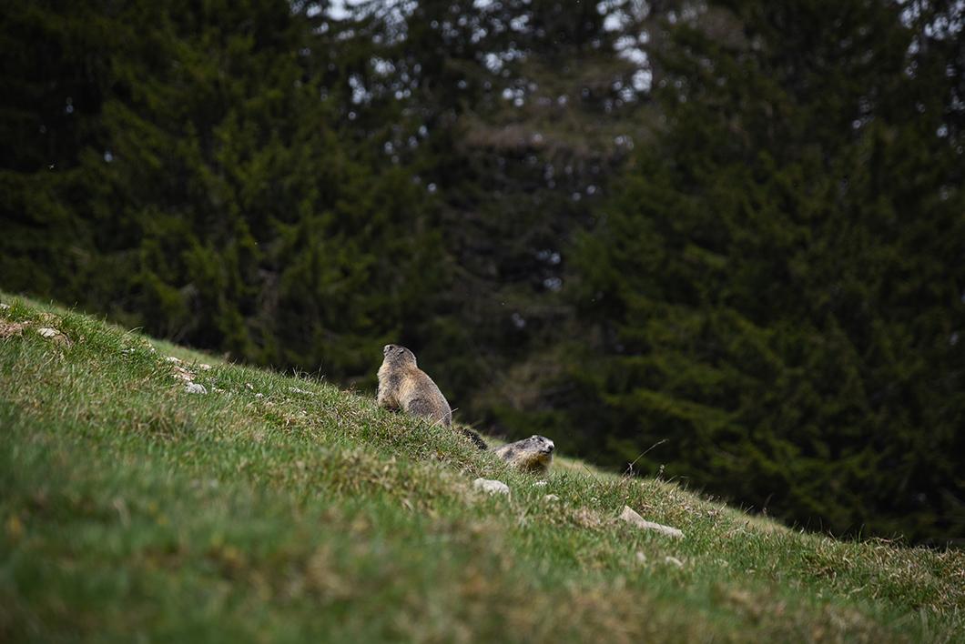 Rendre visite aux animaux du Parc du Merlet