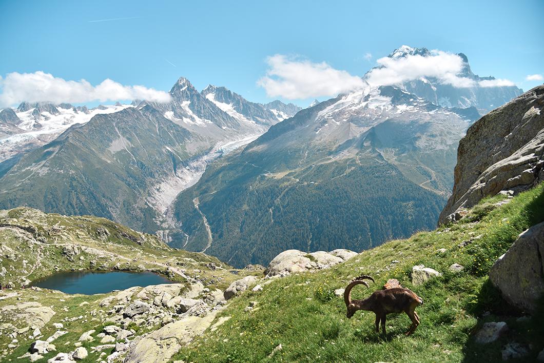 Aller voir le Lac Blanc et les Lacs de Cheserys, une semaine à Chamonix