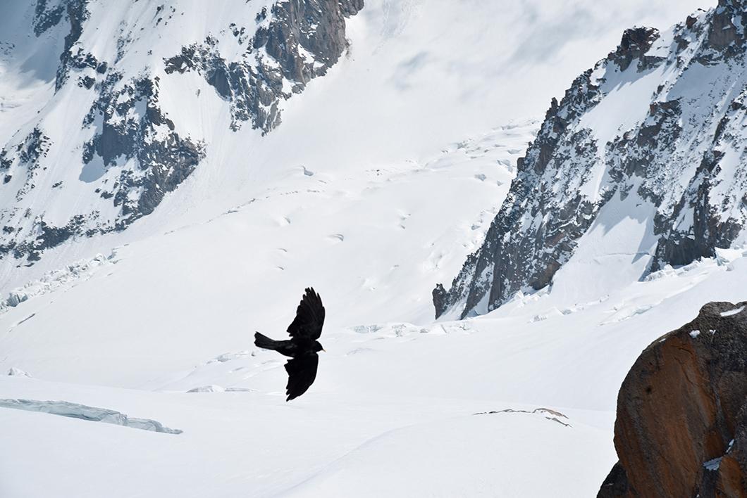 Les oiseaux qui planent à l'Aiguille du Midi