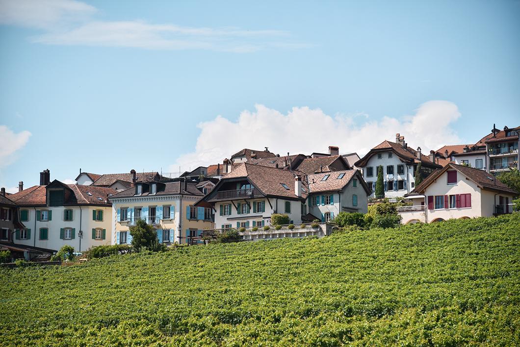 Découvrir les vignes de Lavaux, Incontournables à visiter au Lac Léman