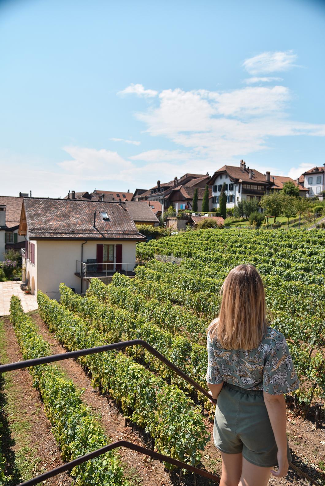 Les vignobles en terrasse de Lavaux