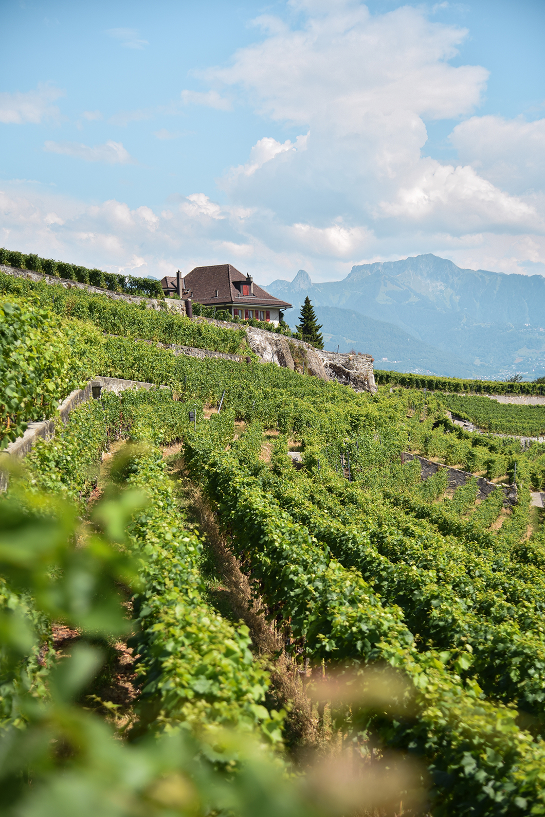 Les vignobles en terrasse de Lavaux, visite incontournables au Lac Léman
