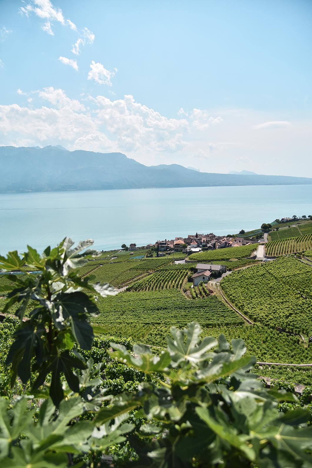 Les jolis points de vue dans les vignes de Lavaux