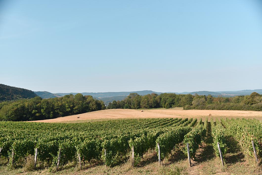 Les vignes du Jura