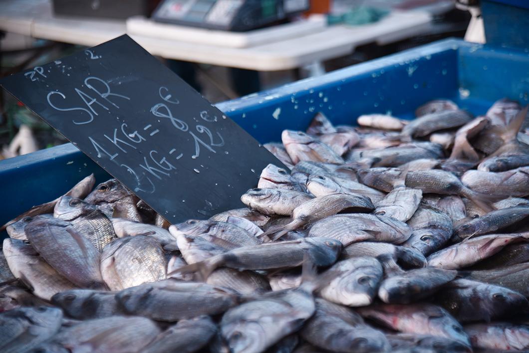Découvrir le Vieux Port et son marché aux poissons, incontournable à visiter à Marseille en hiver