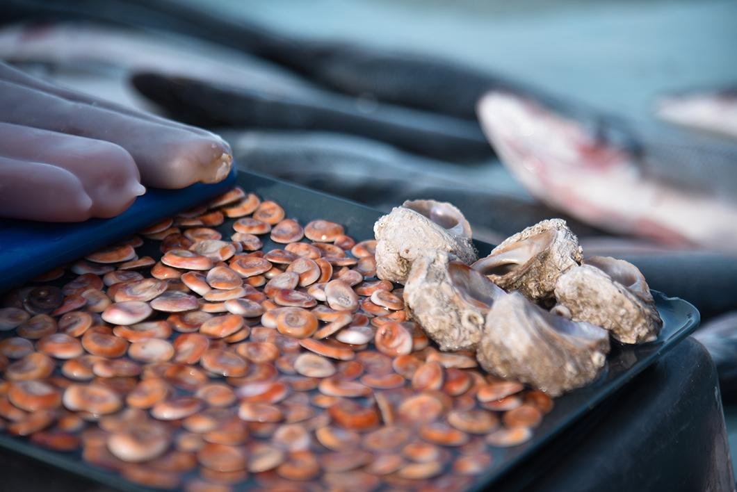 Le Vieux Port et le marché aux poisson, visite incontournable à Marseille