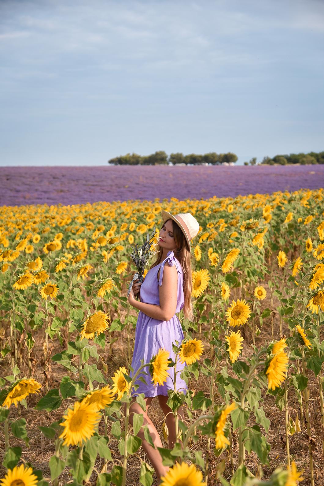 Les plus beaux champs de fleurs de la Route de Manosque à Valensole