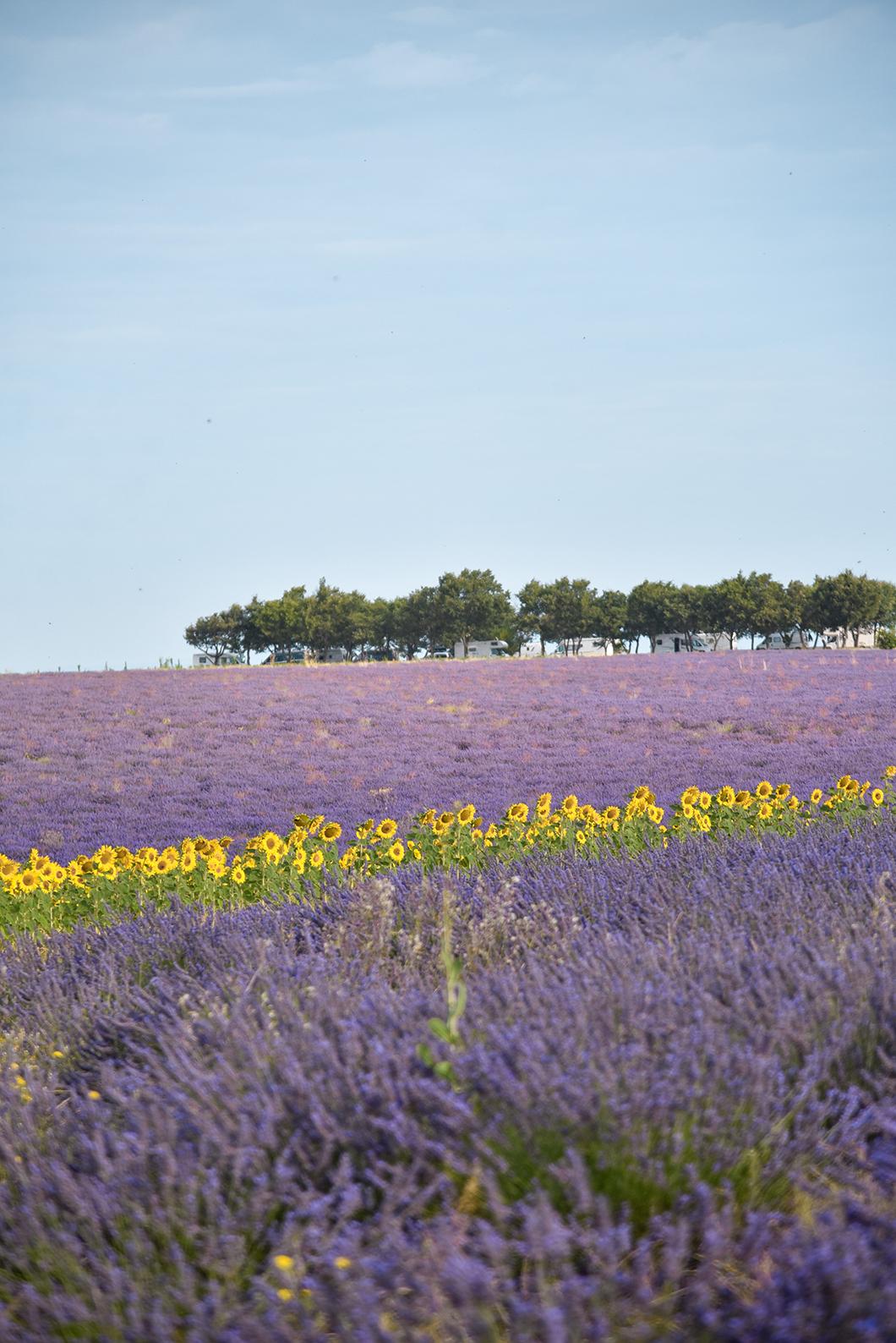 Nos incontournables à Valensole en Provence