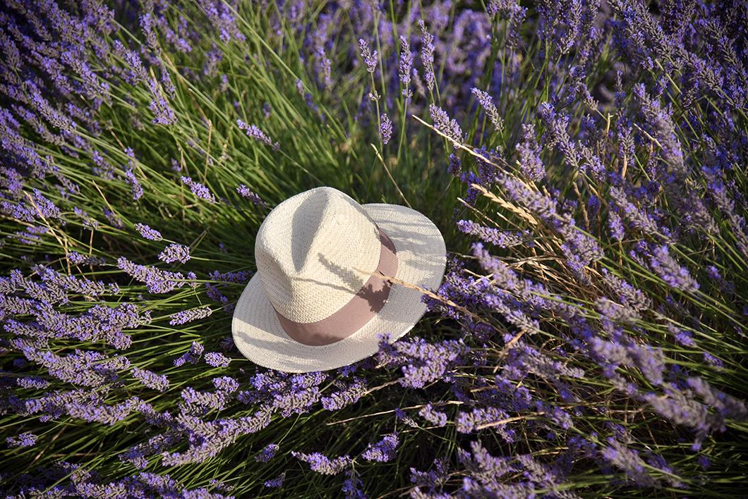 Point de vue sur le village de Valensole en Provence