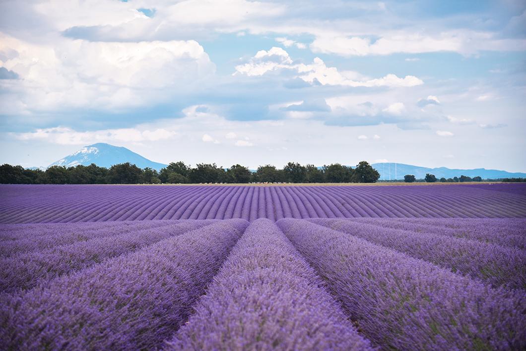 Que faire dans les Alpes-de-Haute-Provence ? Visiter Valensole