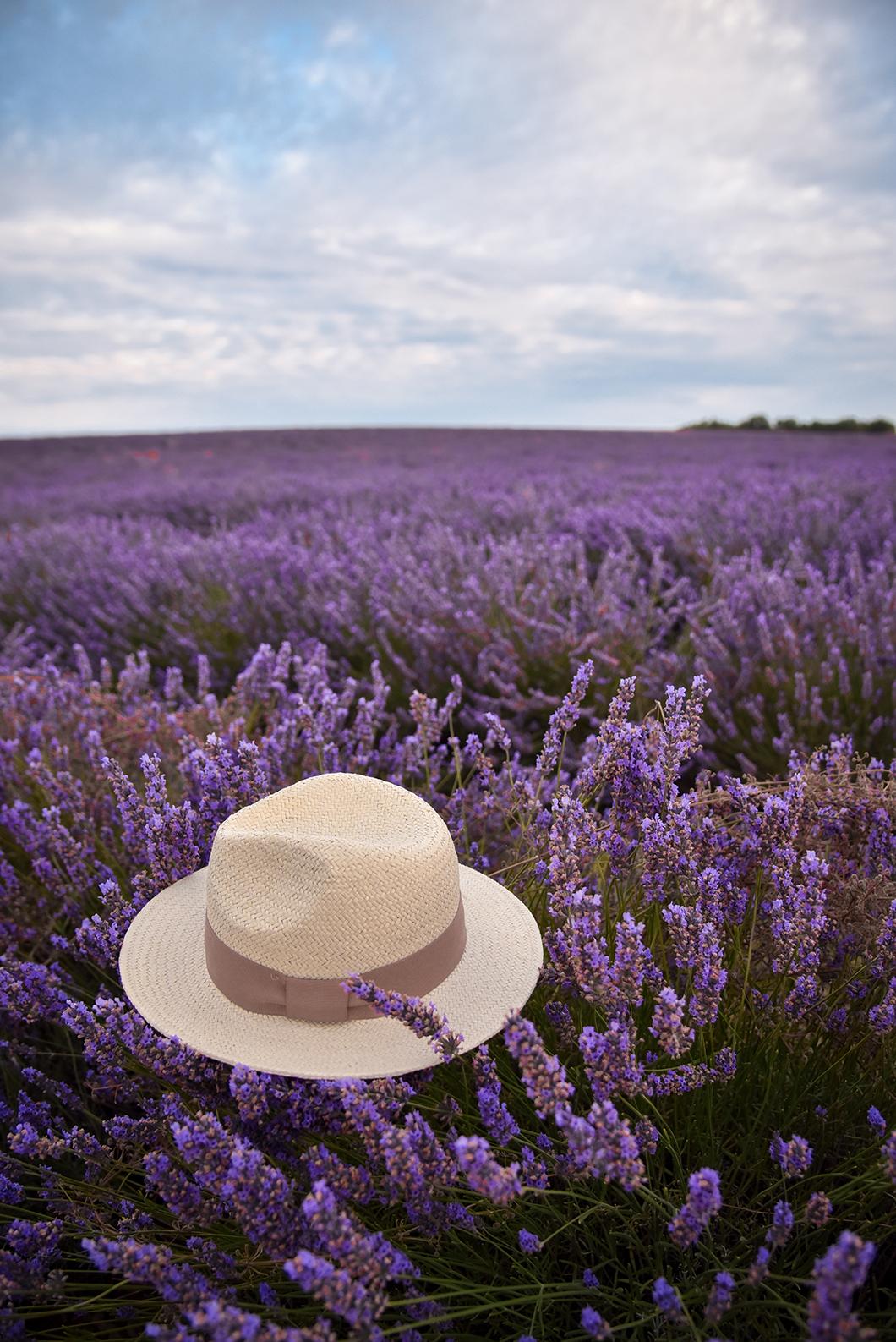 Que faire à Valensole ? Admirer ses beaux champs de lavande