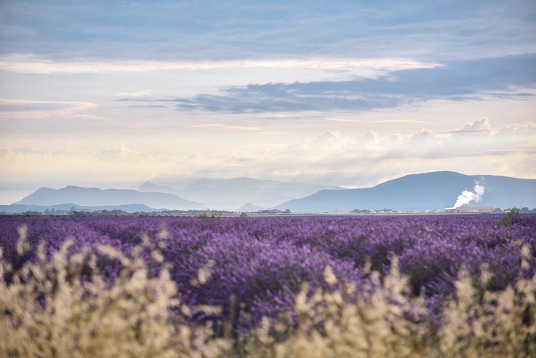 Que faire en Provence ? Découvrir Valensole