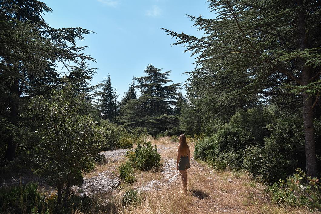 Rando dans la Forêt des cèdres du Luberon