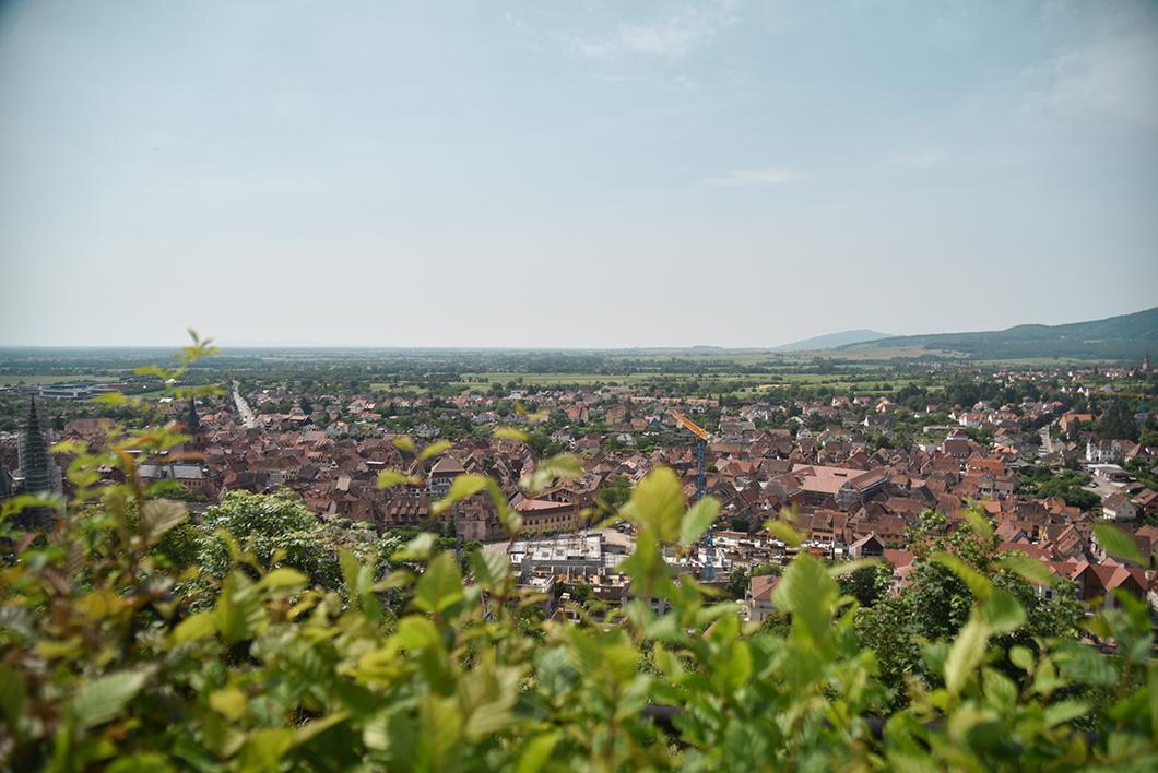 Point de vue sur Obernai et les environs