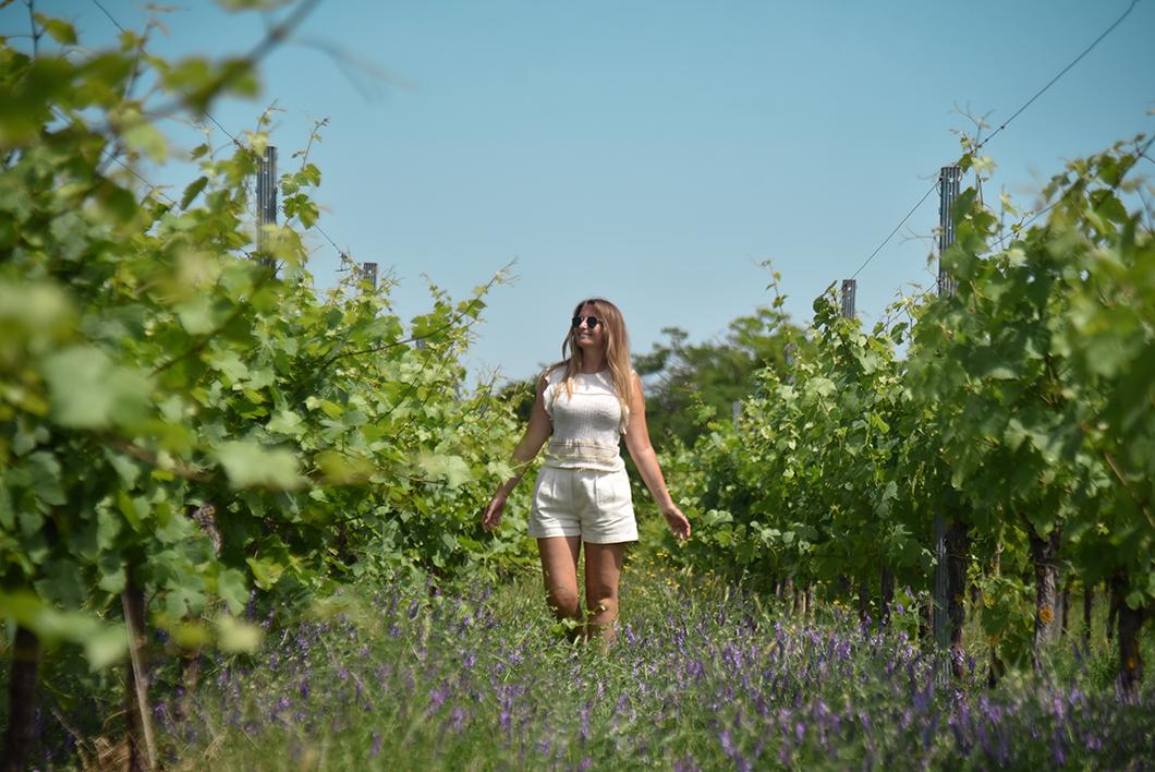 Les beaux vignobles du Pays de Sainte-Odile
