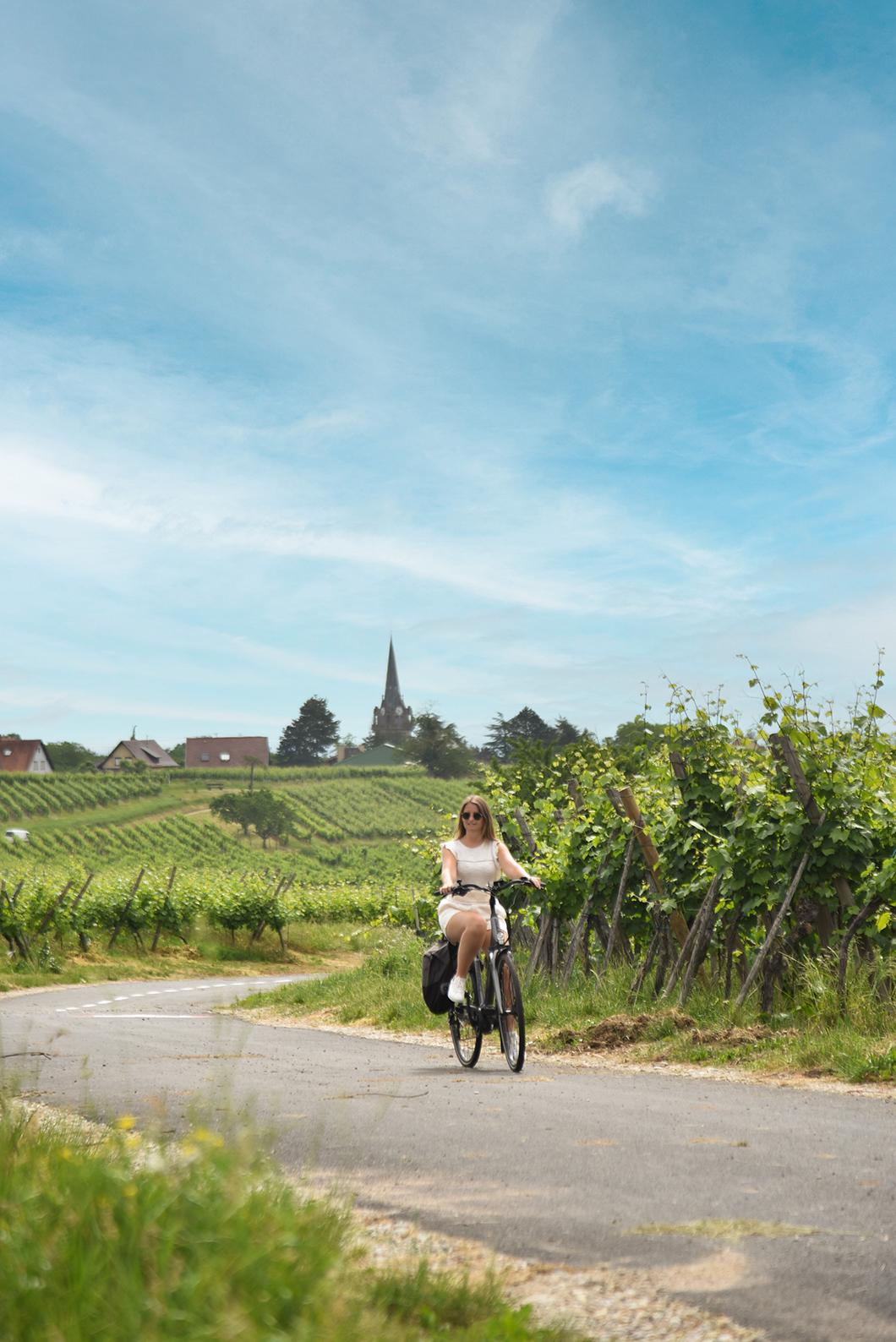 Faire une balade à vélo dans les vignes à Obernai et dans les environs
