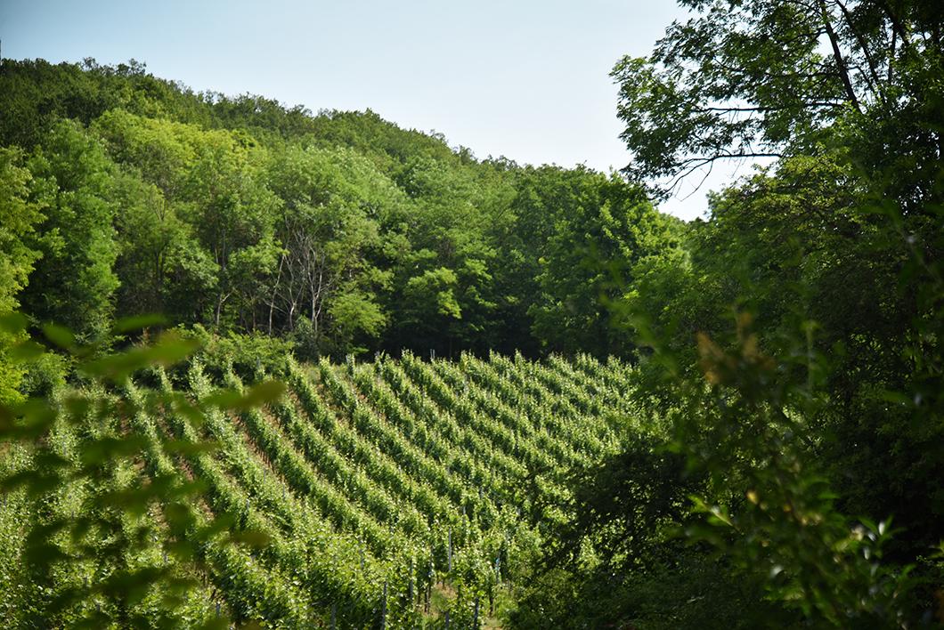 Faire la route des vins d'Alsace dans les environs de Obernai